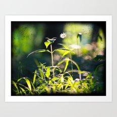 Evening Plant Glow Art Print