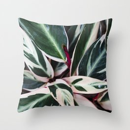 Stromanthe Triostar  |  The Houseplant Collection Throw Pillow