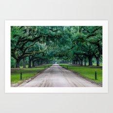 Tangled Trees Art Print