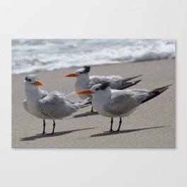 tern, tern, tern Canvas Print