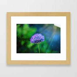 Allium Framed Art Print
