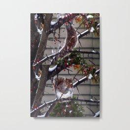 Winter Squirrel (3) Metal Print