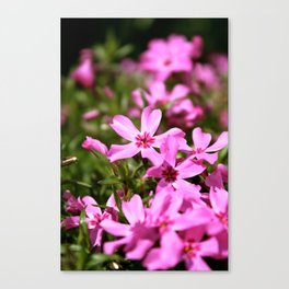 Spring Time Flowers Canvas Print