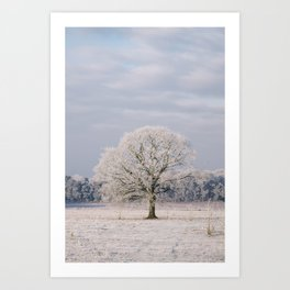 Tree covered in a thick hoar frost. Norfolk, UK. Art Print