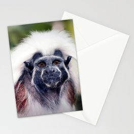 Cotton-top Marmoset Stationery Cards