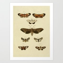 Vintage Moths Art Print