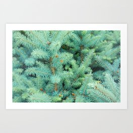 Thorns of Fir Art Print