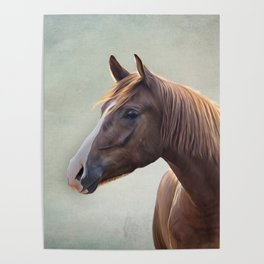 Horse. Drawing portrait Poster