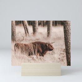 Scottish Highlander Photo | Wildlife Photography Art Print | Scottish Highlander In Deelerwoud Mini Art Print