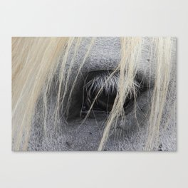 eye of the horse Canvas Print