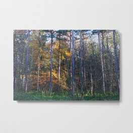 Colourful Autumn Woodland (Landscape Format) Metal Print