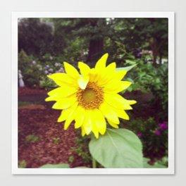 Winking Sunflower Canvas Print
