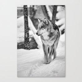Remembering snow Canvas Print