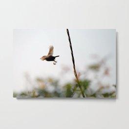 Wren Songbird Bird on Rusty Wire (Troglodytes) Metal Print