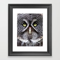 Great Gray Owl Framed Art Print