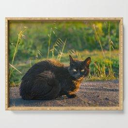 Adult Black Cat at Park Serving Tray