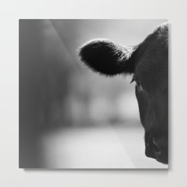 Cattle Portrait Metal Print
