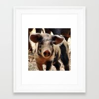 piglet Framed Art Prints featuring Young Piglet by MehrFarbeimLeben