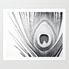 Black and White Peacock Feather Photography, Grey Nature, Neutral Gray Feathers Art Print
