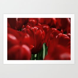 Tulipes a NY Art Print