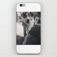great dane iPhone & iPod Skins featuring Great Dane by aubreyplays
