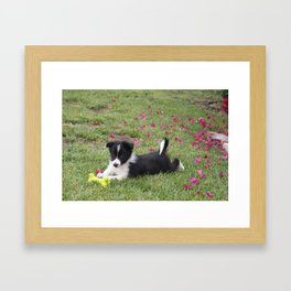 Border Collie Framed Art Print