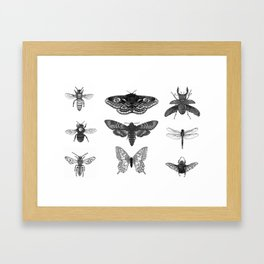 Insect Illustration Collection Framed Art Print