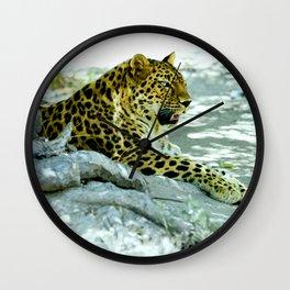 Leopard in Repose Wall Clock