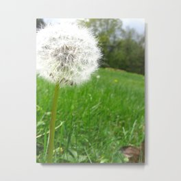 White Dandelion Metal Print