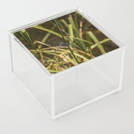 Dragonfly in the marsh Acrylic Box