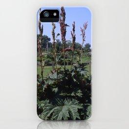 Rhubarb - Rheum sp. iPhone Case