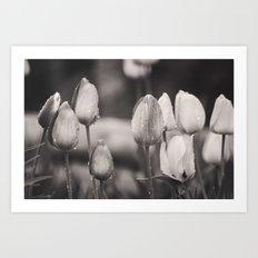 Tulip Tears Mono Art Print