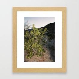 Creosote Bush Framed Art Print