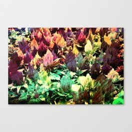 In this land Canvas Print