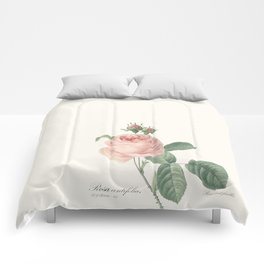 Botanical Book Plates - The Rose Comforters