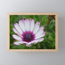 Pretty Purple Tips Framed Mini Art Print