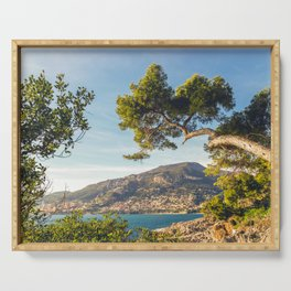 Maritime pine trunk in French Riviera in a sunny day Serving Tray