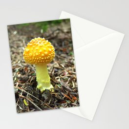 Mushroom O Stationery Cards