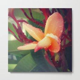 Close-up Flower Metal Print