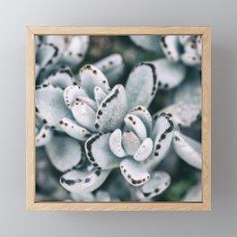 Blue soft and delicate cactus Framed Mini Art Print