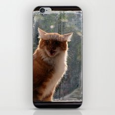 Ginger Cat waiting by the window (CW003) miaouuuuuu iPhone & iPod Skin