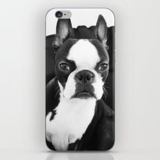 Lulo's evil look. iPhone & iPod Skin