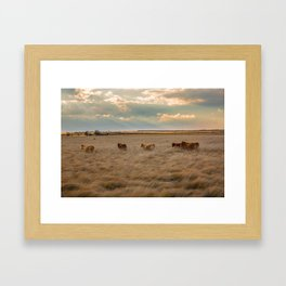 Cows Among the Grass - Cattle Wade Through a Field in Texas Framed Art Print