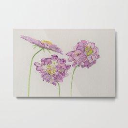 Watercolour Scabiosa Flower Metal Print