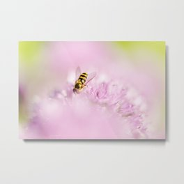 Hoverfly on Allium - Onion Flower 2 Metal Print