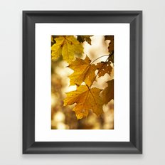 Yellow (Maples) Framed Art Print