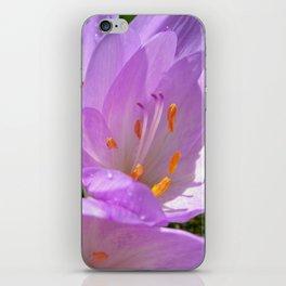 crocus bloom iPhone Skin