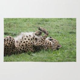 Cheetahs don't always run Rug