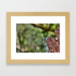 Dragonfly, Port Douglas Framed Art Print