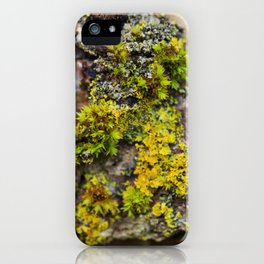 Moss on a Fallen Tree iPhone Case